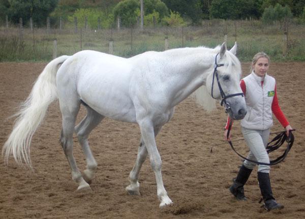 http://www.horses.obninsk.ru/image/2005/18/11.jpg
